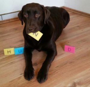 Informationen zum Hund in der Schule